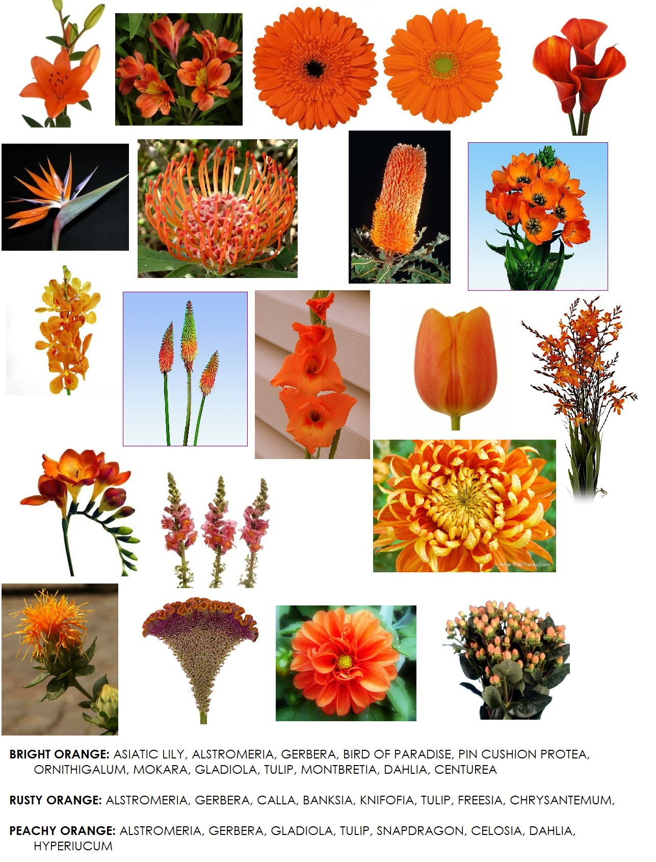 Fall Wedding Flowers Orange : Orange colored flowers readily available in western