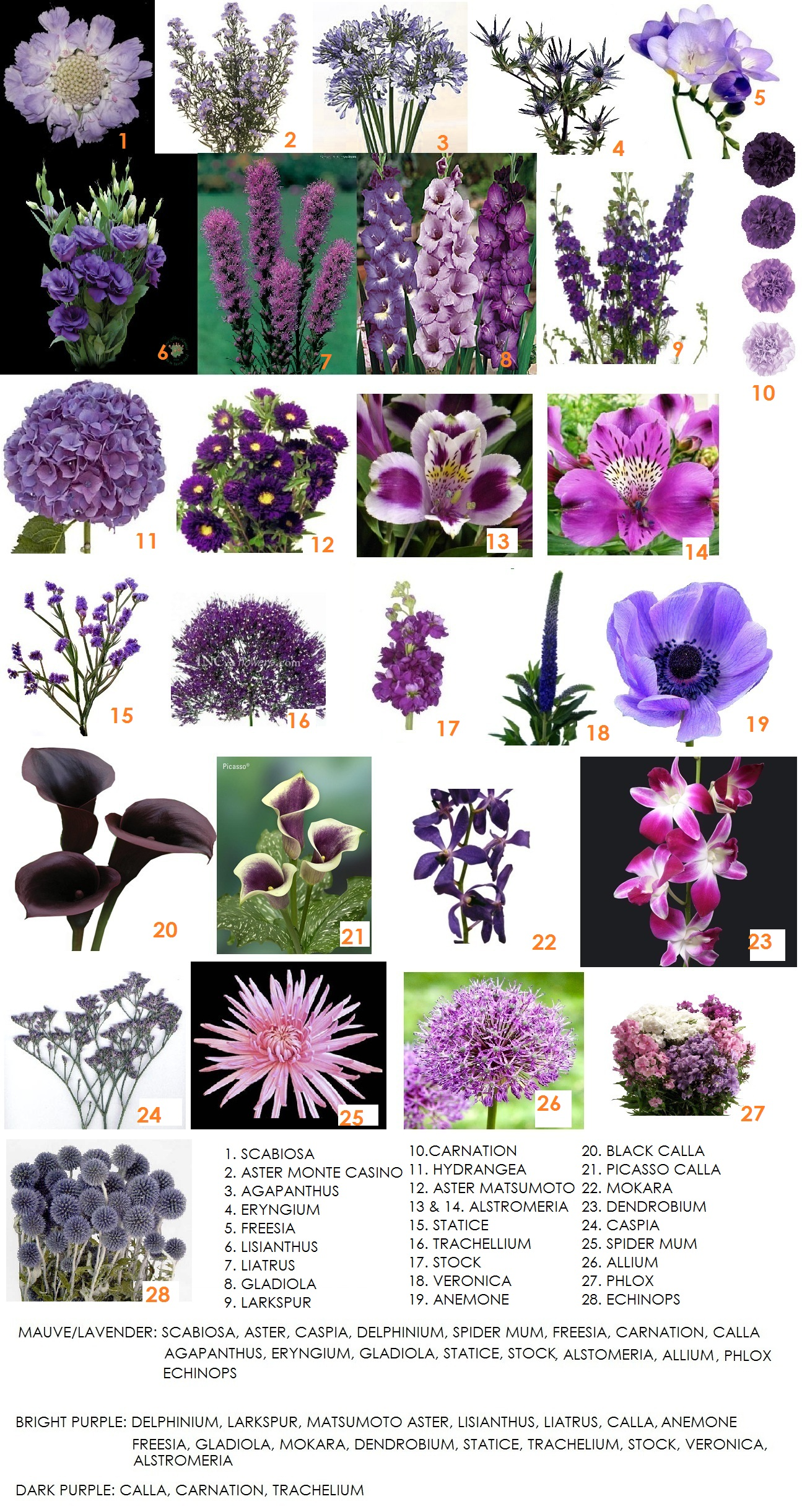 Flower Information Archives Page 7 Of 9 Dahlia Floral Design