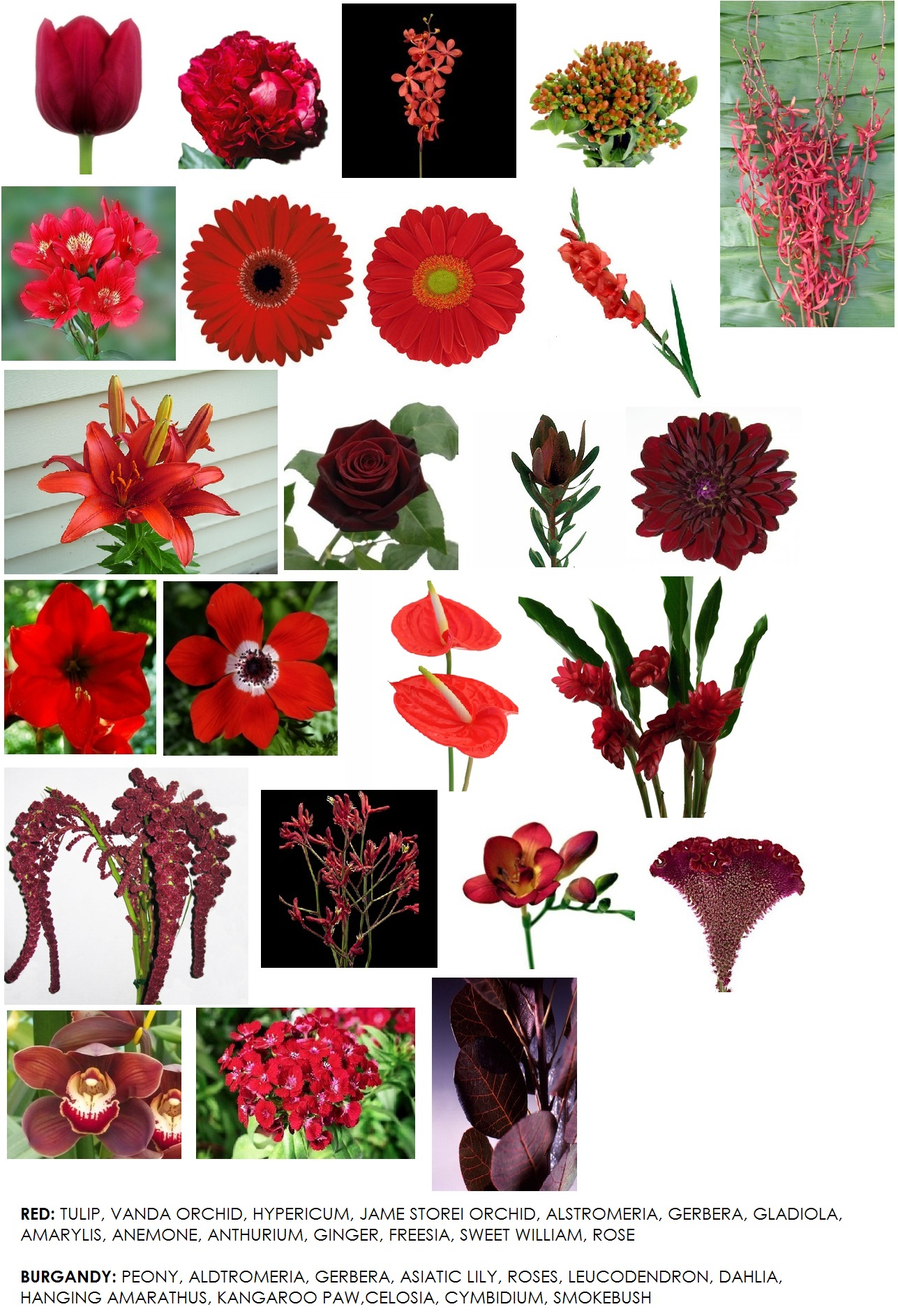 Color Series - Red Flowers For Weddings - Dahlia Floral Design