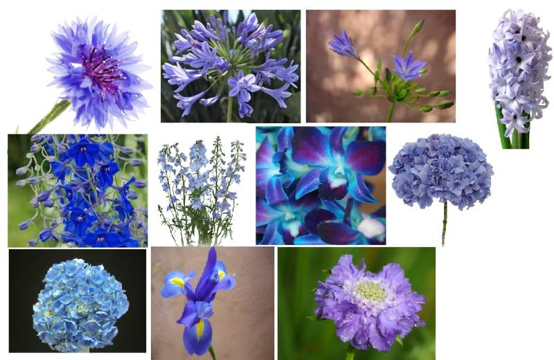 I Love Blue Flowers For My Wedding, But What Flowers Come ...