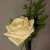 ROSE WITH CEDAR BOUTONNIERE 1200